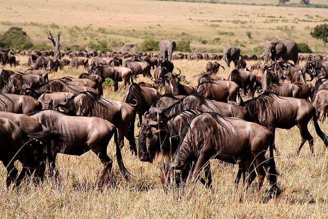 masai-mara-kenia