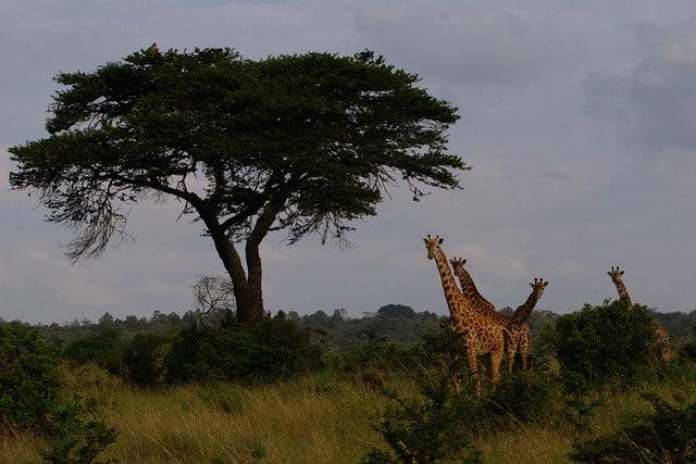 10 atracciones turísticas en Kenia