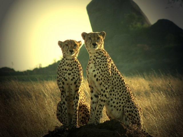 10 atracciones turísticas en Tanzania