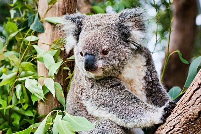 Los 10 mejores atracciones turísticas de Sidney