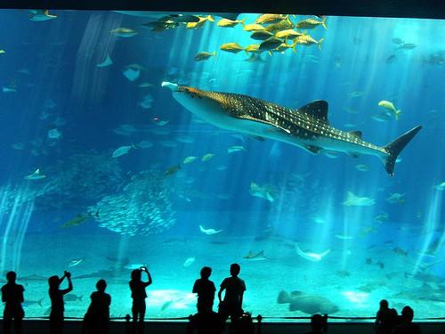 cancun-acuario