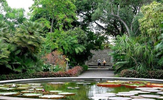 Jardín Botánico de Tenerife