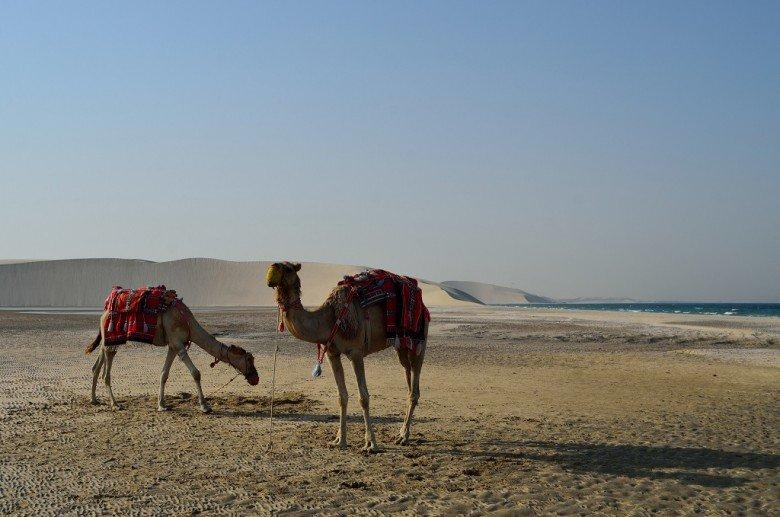 safari en el desierto de Doha